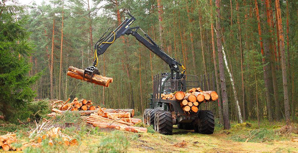 Skogsindustri